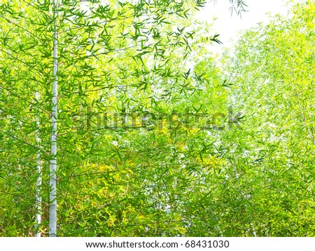 Bamboo leaves and branch - stock photo