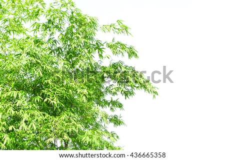 Bamboo leaves background. - stock photo