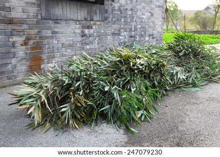 Bamboo leaves for Giant Panda - stock photo