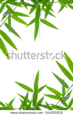 bamboo leaves High resolution image of wet bamboo-leaves isolated on a white background with clipping path