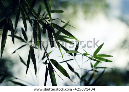bamboo leaves in fog