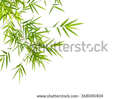 Bamboo leaves isolated on white. - stock photo