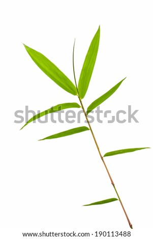 bamboo leaves isolated on white background, clipping path included - stock photo
