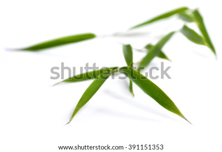 Bamboo leaves, isolated on white background. Fresh, green bamboo-leaves, zen-like. Single object with clipping path.