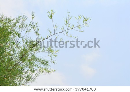 Bamboo leaves on blue sky background
