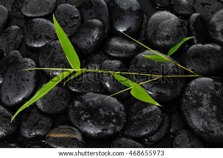 bamboo leaves on pile of wet black stones