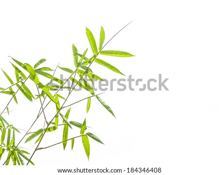 Bamboo leaves on white background. - stock photo