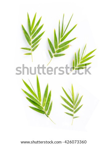 Bamboo leaves on white background - stock photo
