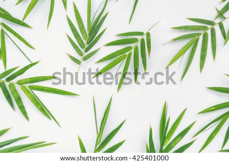 Bamboo leaves on white background, Green bamboo leaf texture - stock photo