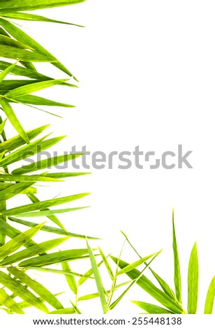 Bamboo leaves on white isolated background with copy space. Bamboo leaves isolated.  - stock photo