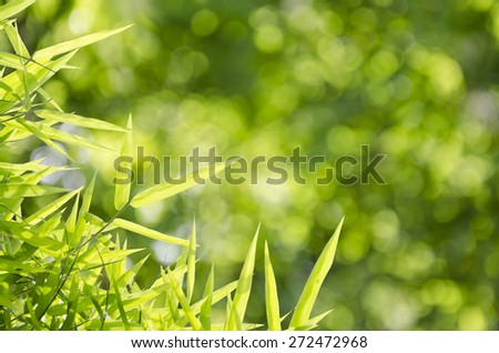 Bamboo leaves over abstract blurred background - stock photo