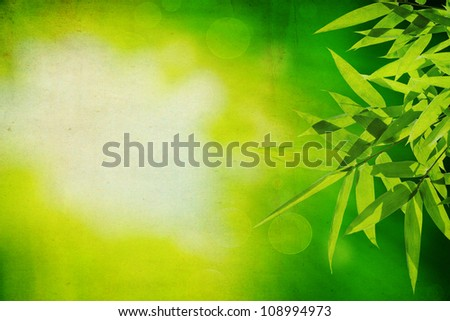 Bamboo leaves with green grunge background
