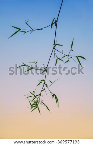 Bamboo on color full background