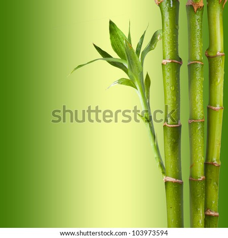 Bamboo on green and yellow background. Concept for relaxation - stock photo
