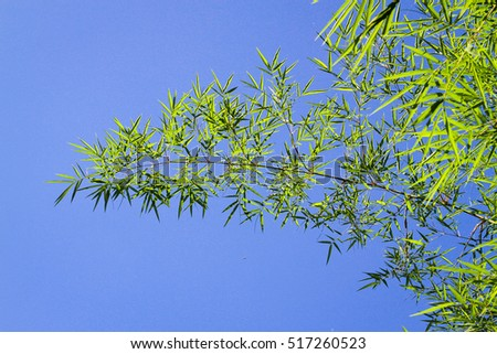 Bamboo on the blue sky background.