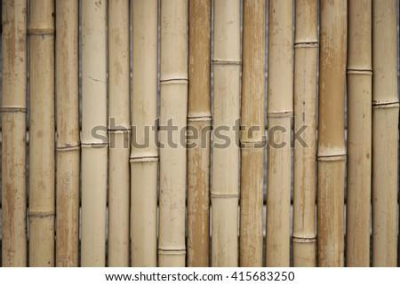 Bamboo pattern - stock photo