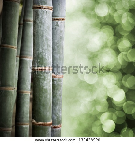Bamboo plant at green bokeh background - stock photo