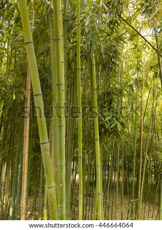 Bamboo plants and stems in a park - stock photo