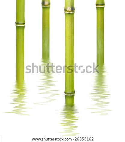 bamboo reflecting on the water surface - stock photo