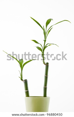 bamboo shoots in green vase