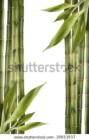 Bamboo shoots on white - stock photo
