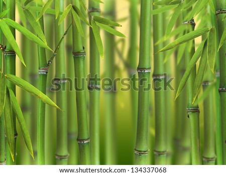 Bamboo sprouts forest - stock photo