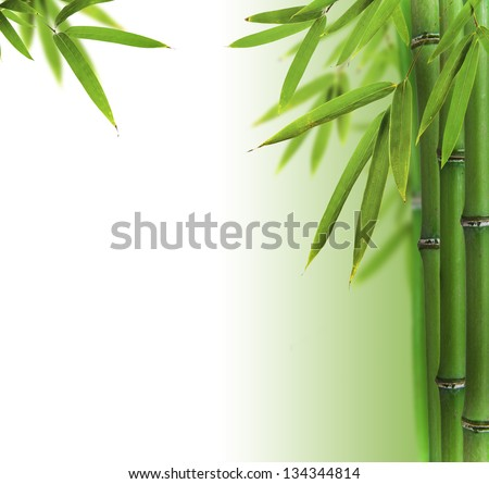 how to cook bamboo sprouts