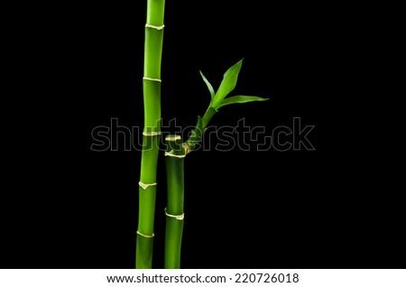bamboo stalks on black background - stock photo
