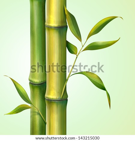 bamboo stem  and leaves illustration - stock photo