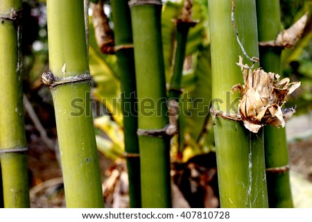 bamboo stems background.
