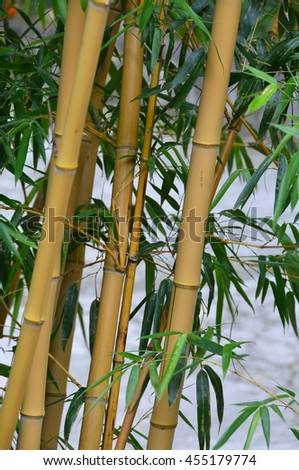 Bamboo Stock Photos Images Amp Pictures Shutterstock