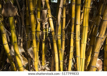Bamboo Stock Photos Royalty Free Images Amp Vectors