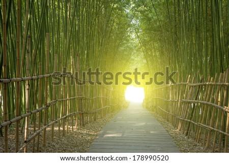 Bamboo Sunrise Corridor - stock photo