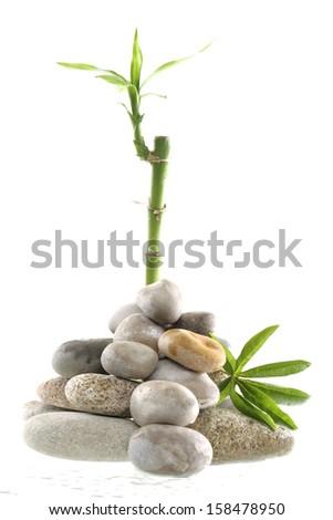 Zen tree stock photos images pictures shutterstock - Symbole zen attitude ...