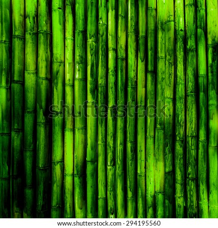 Bamboo texture. Green nature background - stock photo