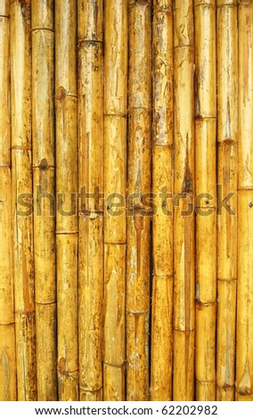 Bamboo texture in Thailand - stock photo