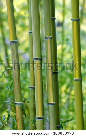 Bamboo Tree Closeup