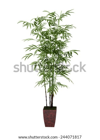 bamboo tree in pot culture on white background,