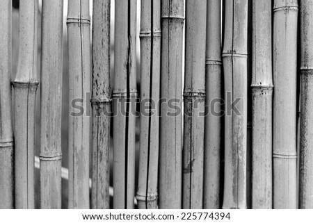 bamboo trunks - stock photo