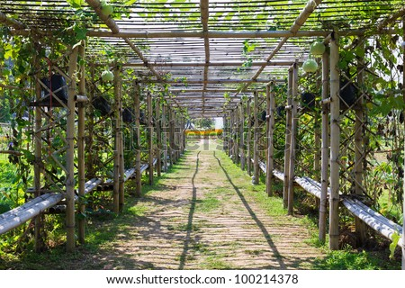 Bamboo tunnel in the garden covered by squash - stock photo