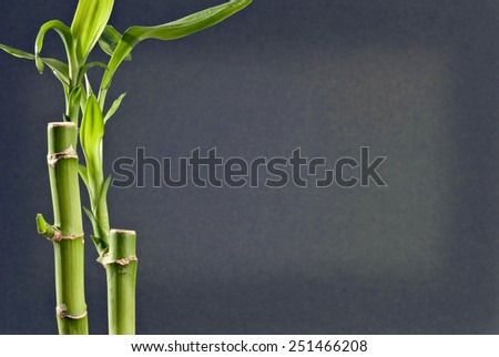 Bamboo With Copy Space - stock photo