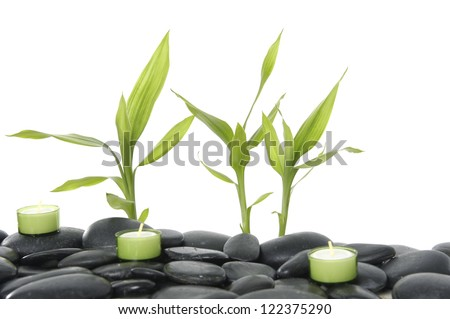 bamboo with three candle on zen basalt stones