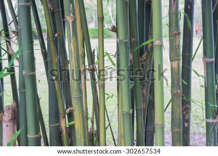 bamboo wooden fence with green leaf in traditional garden background