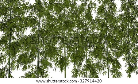 Bamboos isolated in white background - 3D render - stock photo