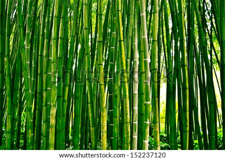 Bamboo stock photos illustrations and vector art