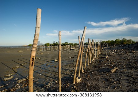 Bammboo at lowest level of sea water in the mangrove forest - stock photo