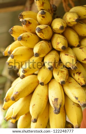 Banana bunch in market