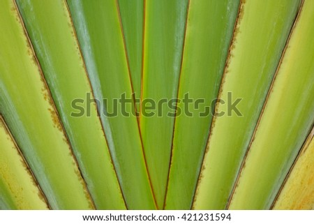 Banana leaf abstract backgrounds