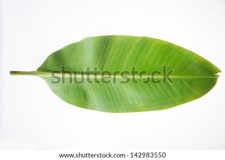 banana leaf/banana green leaf - stock photo
