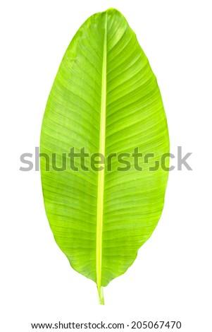 Banana Leaf Fresh - stock photo